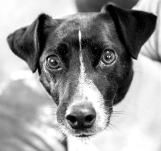 silvanarainphotography,portraits,pets,blackandwhite