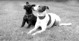silvanarainphotography, dog portraits, black and white, Baz and Maisie