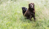 silvanarainphotography, dog portraits, Roxy and Bootsie